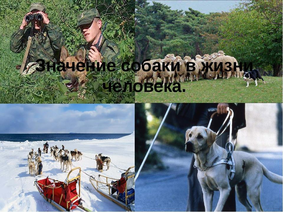 Значение собаки в жизни человека.