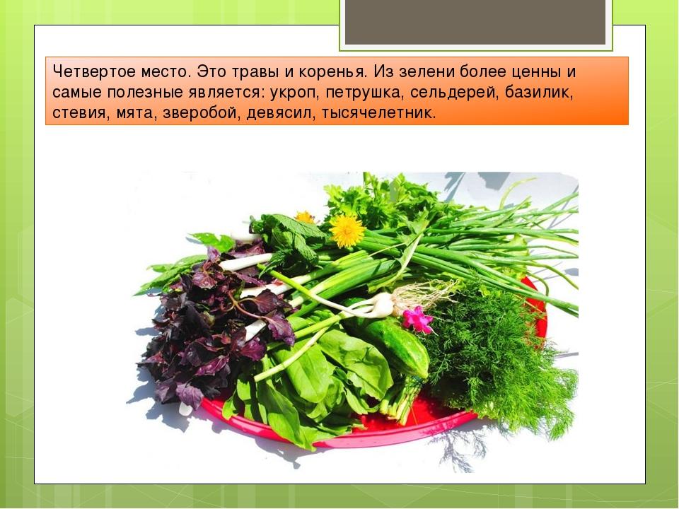 Четвертое место. Это травы и коренья. Из зелени более ценны и самые полезные...