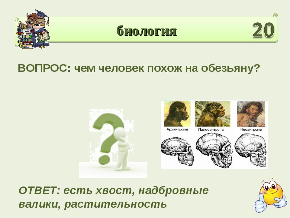 биология ВОПРОС: чем человек похож на обезьяну? ОТВЕТ: есть хвост, надбровные...