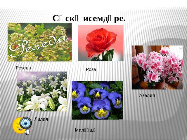 Сәскә исемдәре. Резеда Азалия Лилия Миләүшә Роза