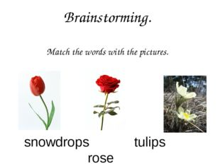 Brainstorming. Match the words with the pictures. snowdrops tulips rose