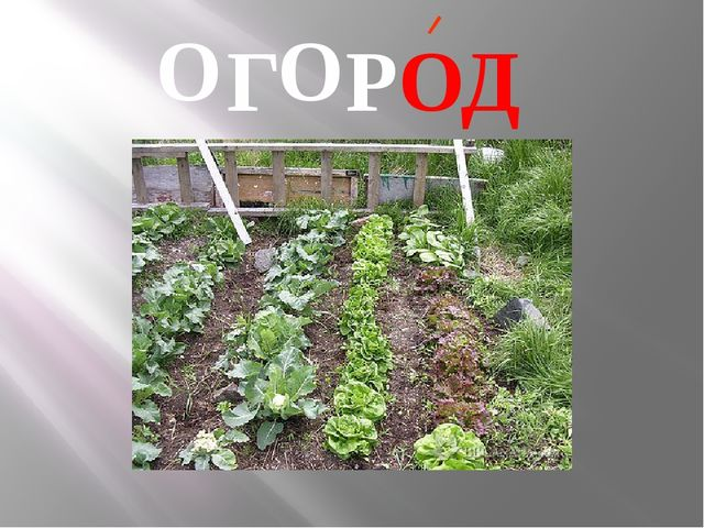 Г РОД О О