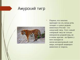 Амурский тигр Первое, что многим приходит на ум, когда речь заходит о самых р