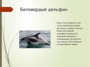Беломордый дельфин Как и тело сивуча, тело этого животного может достигать дл