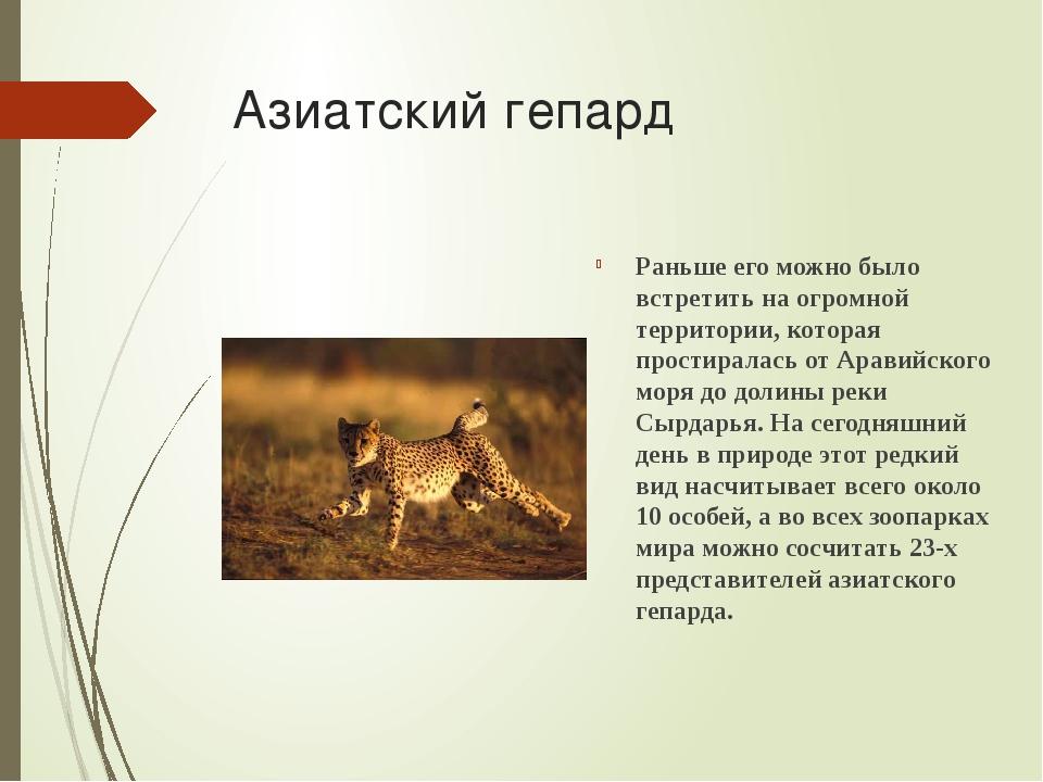 Азиатский гепард Раньше его можно было встретить на огромной территории, кото...