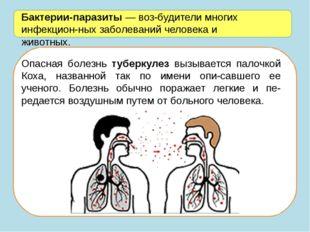 Бактерии-паразиты — возбудители многих инфекционных заболеваний человека и