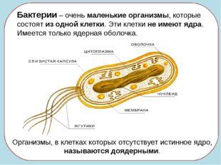 Бактерии – очень маленькие организмы, которые состоят из одной клетки. Эти к