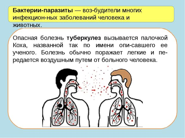 Бактерии-паразиты — возбудители многих инфекционных заболеваний человека и...
