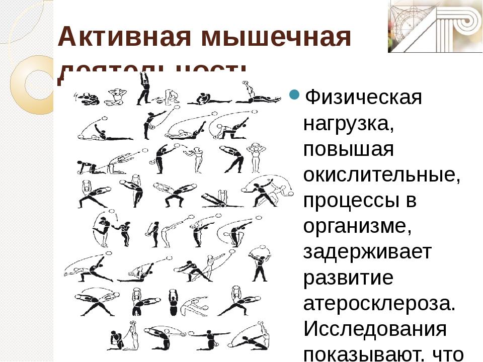 Активная мышечная деятельность Физическая нагрузка, повышая окислительные, пр...