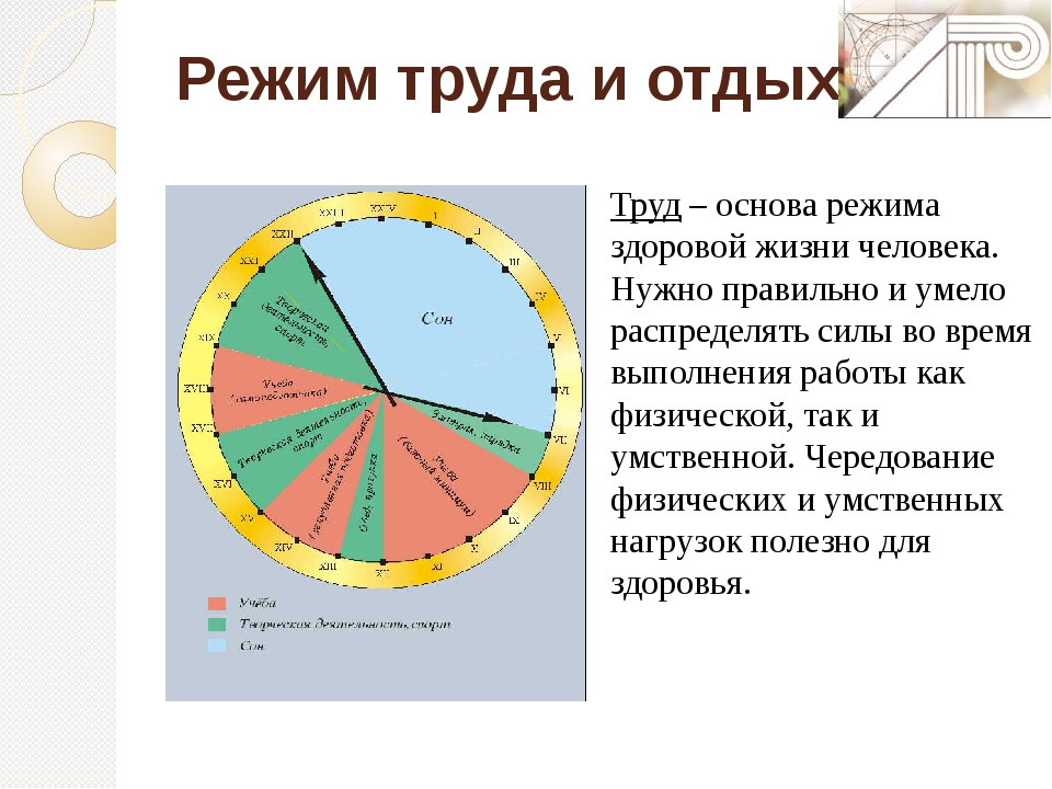 Режим труда и отдыха Труд– основа режима здоровой жизни человека. Нужно пра...