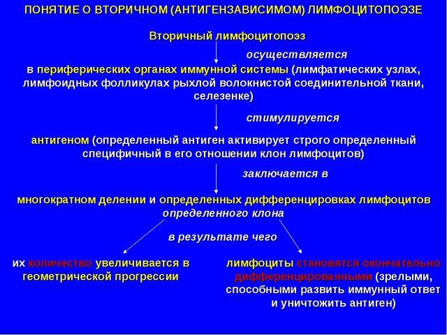 ПОНЯТИЕ О ВТОРИЧНОМ (АНТИГЕНЗАВИСИМОМ) ЛИМФОЦИТОПОЭЗЕ Вторичный лимфоцитопоэз...