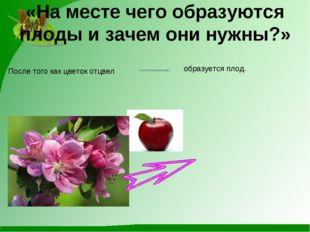 «На месте чего образуются плоды и зачем они нужны?» После того как цветок отц