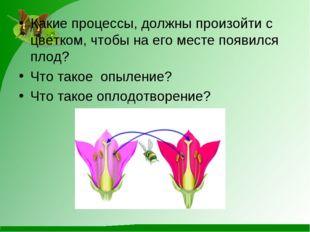 Какие процессы, должны произойти с цветком, чтобы на его месте появился плод?