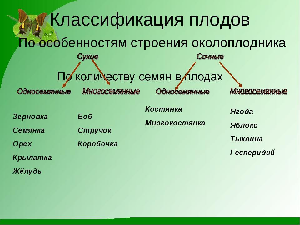 Классификация плодов По особенностям строения околоплодника Зерновка Семянка...
