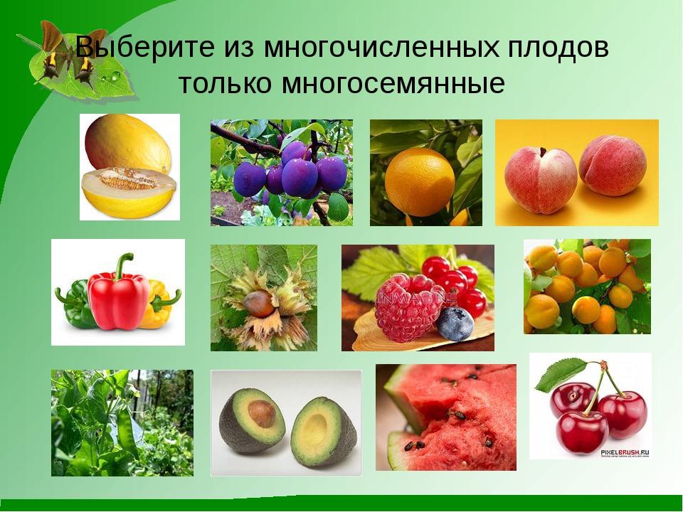 Выберите из многочисленных плодов только многосемянные