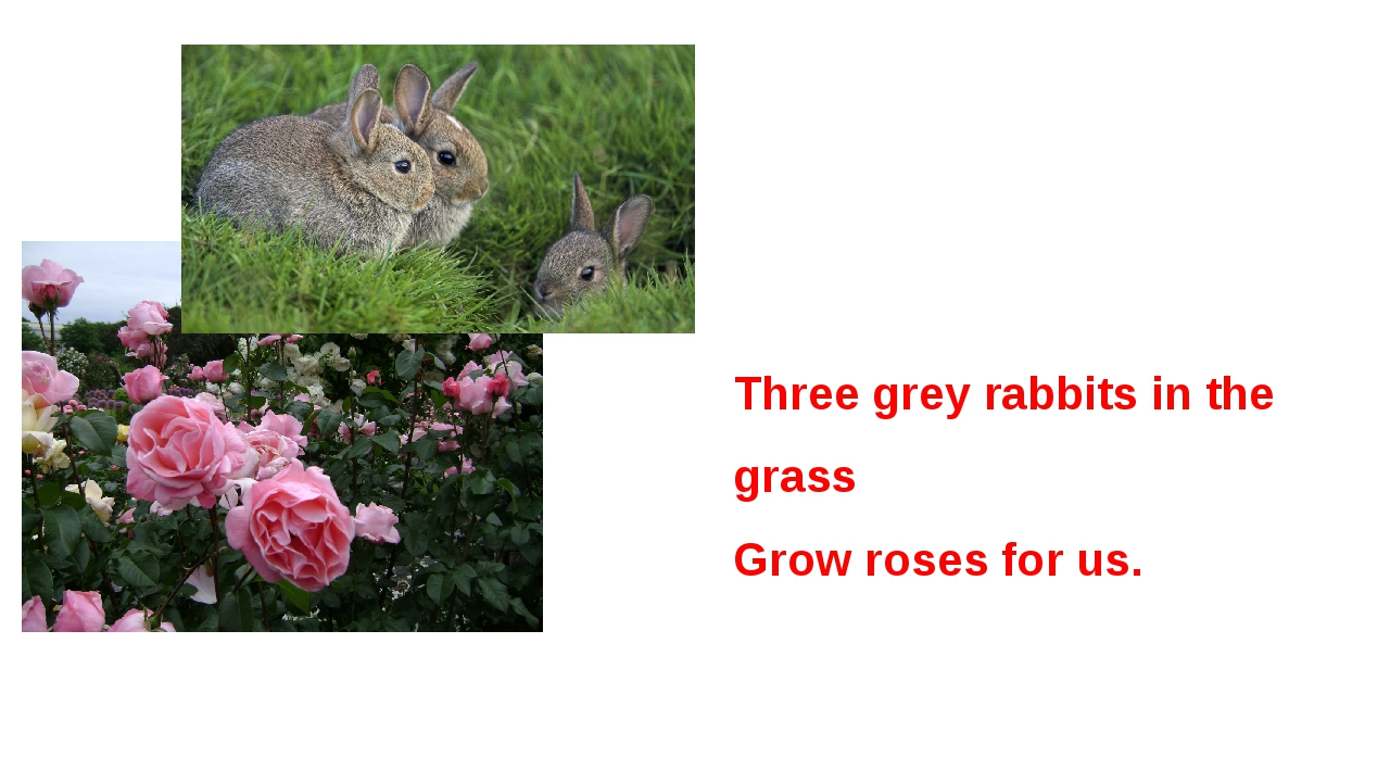 Three grey rabbits in the grass Grow roses for us.