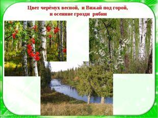 Цвет черёмух весной, и Вижай под горой, и осенние грозди рябин