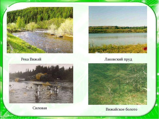 Река Вижай Лаковский пруд Силовая Вижайское болото