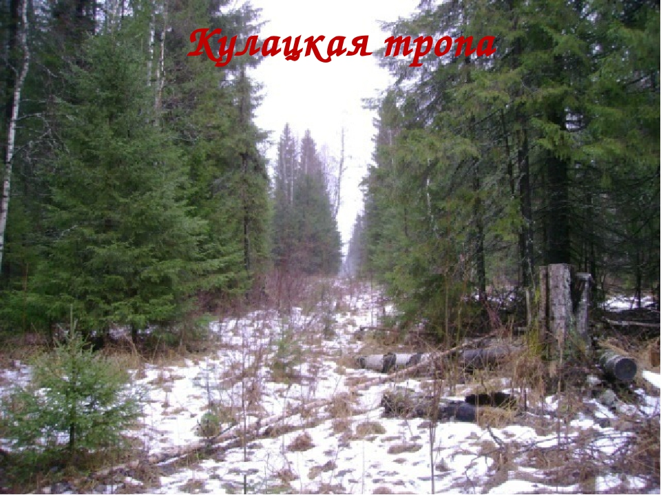 Кулацкая тропа
