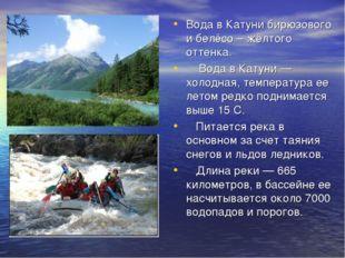 Вода в Катуни бирюзового и белёсо – жёлтого оттенка. Вода в Катуни — холодная