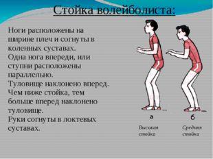 Стойка волейболиста: Ноги расположены на ширине плеч и согнуты в коленных сус