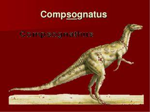 Compsognatus