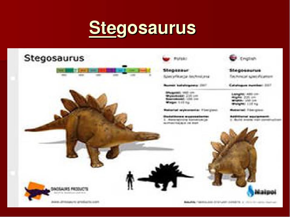 Stegosaurus Stegosaurus Stegosaurus