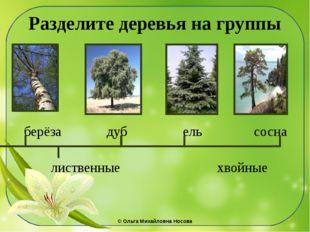 Разделите деревья на группы берёза дуб ель сосна лиственные хвойные ©Ольга М
