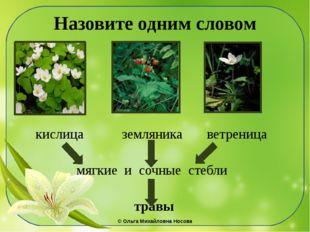 Назовите одним словом кислица земляника ветреница мягкие и сочные стебли трав