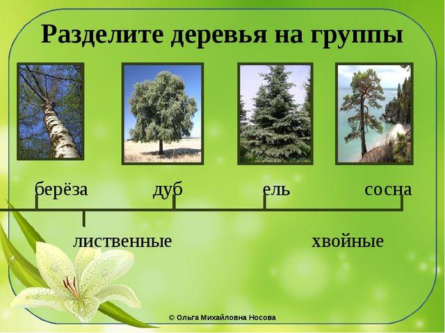 Разделите деревья на группы берёза дуб ель сосна лиственные хвойные ©Ольга М...