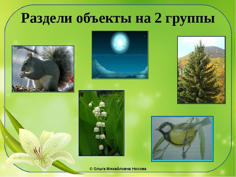Раздели объекты на 2 группы ©Ольга Михайловна Носова