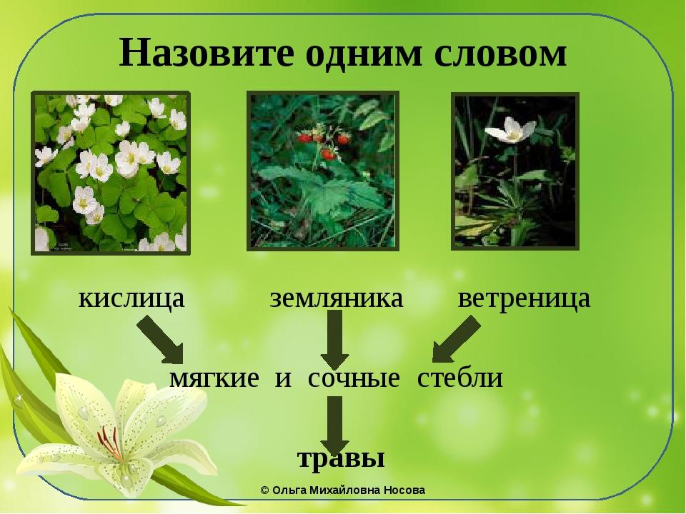 Назовите одним словом кислица земляника ветреница мягкие и сочные стебли трав...