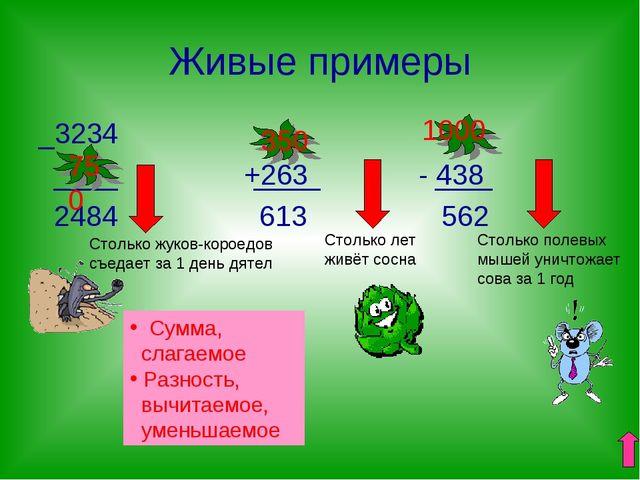 Живые примеры _3234 ____ +263 - 438 2484 613 562 Сумма, слагаемое Разность, в...