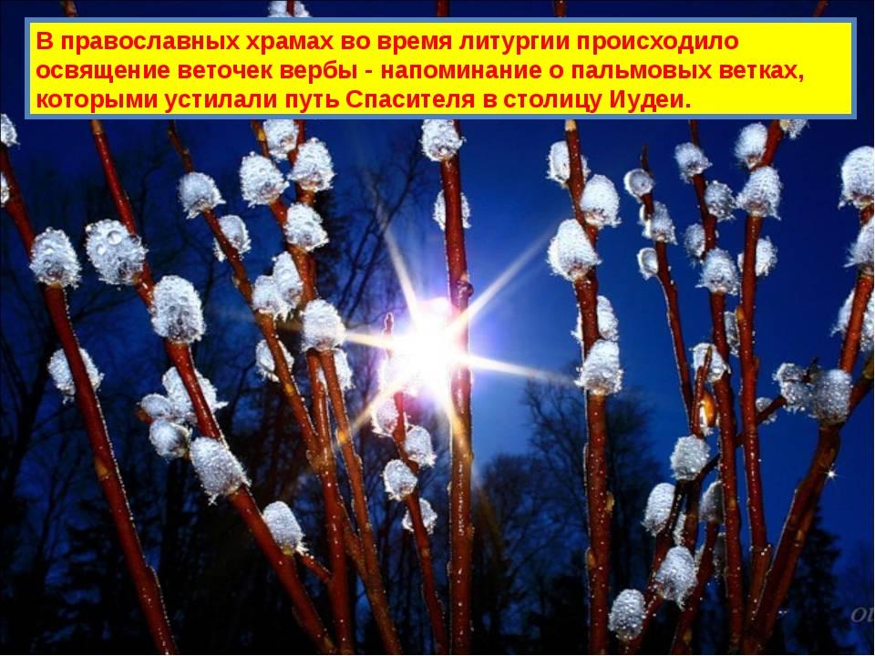 В православных храмах во время литургии происходило освящение веточек вербы -...