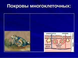 Покровы многоклеточных: 6.Земновод ные Кожа голая и влажная, богатая железами