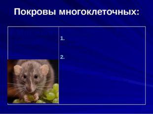 Покровы многоклеточных: 9.Млекопитающие Кожа состоит из слоёв: Эпидермис(нару