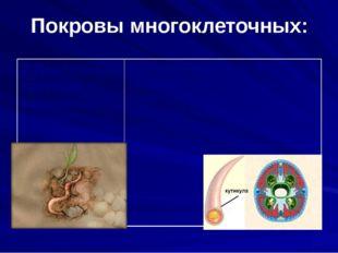 Покровы многоклеточных: 2.Ленточные, круглые, кольчатые черви Плоский эпители
