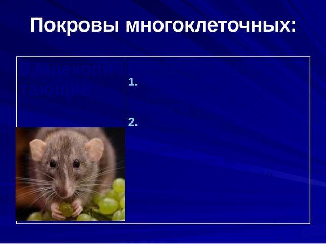 Покровы многоклеточных: 9.Млекопитающие Кожа состоит из слоёв: Эпидермис(нару...