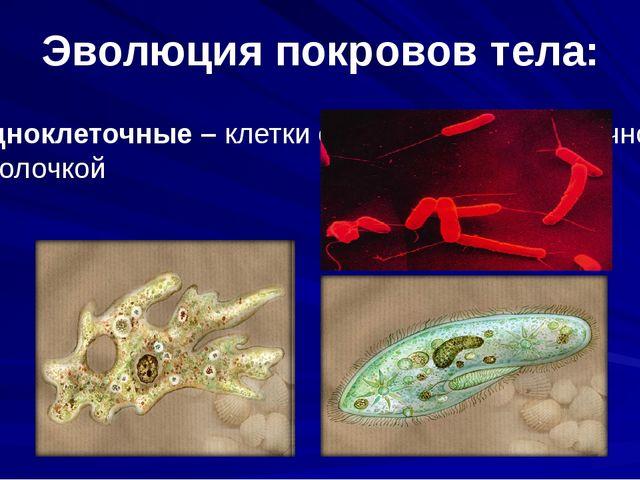 Эволюция покровов тела: Одноклеточные – клетки снаружи покрыты прочной оболоч...