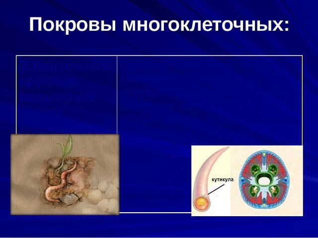 Покровы многоклеточных: 2.Ленточные, круглые, кольчатые черви Плоский эпители...
