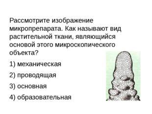 Рассмотрите изображение микропрепарата. Как называют вид растительной ткани,
