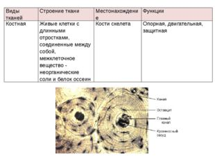 Видытканей Строение ткани Местонахождение Функции Костная Живые клетки с длин