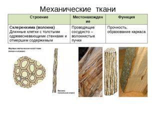 Механические ткани Строение Местонахождение Функция Склеренхима (волокна)Длин