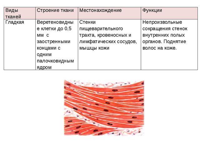 Видытканей Строение ткани Местонахождение Функции Гладкая Веретеновидные клет...
