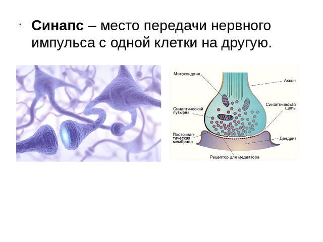 Синапс – место передачи нервного импульса с одной клетки на другую.