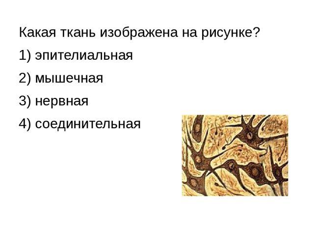 Какая ткань изображена на рисунке? 1) эпителиальная 2) мышечная 3) нервная 4)...