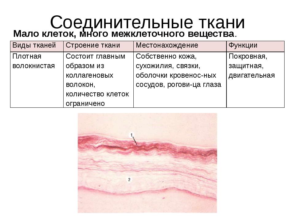 Соединительные ткани Мало клеток, много межклеточного вещества. Видытканей Ст...