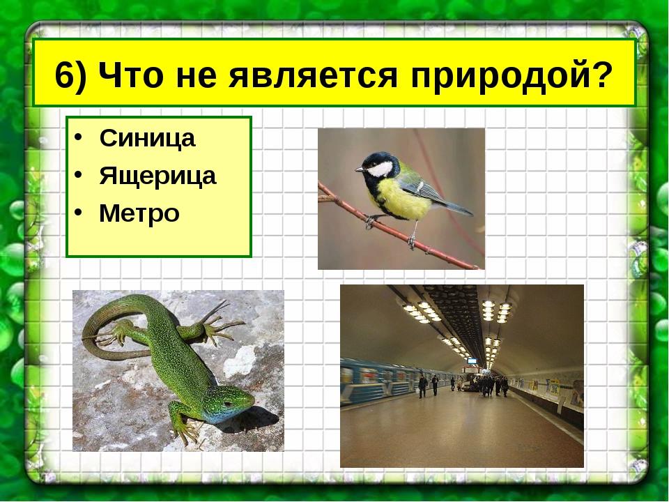6) Что не является природой? Синица Ящерица Метро