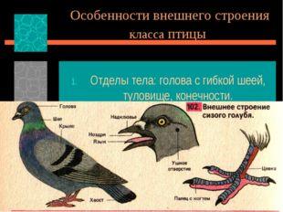 Особенности внешнего строения класса птицы Отделы тела: голова с гибкой шеей,