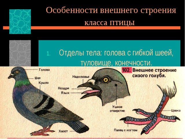 Особенности внешнего строения класса птицы Отделы тела: голова с гибкой шеей,...
